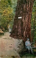 President Roosevelt at Big Tree Shasta Springs CA California pm 1910 Postcard