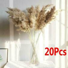 20Pcs Natural Dried Pampas Grass Reed Flower Bunch Bouquet Decoration