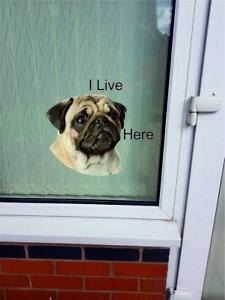"Pug dog ""I LIVE HERE"" Window/Door sticker Decal"