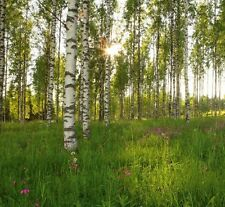 Wall Mural photo wallpaper Birch Trees Green Forest scene home decor nature art