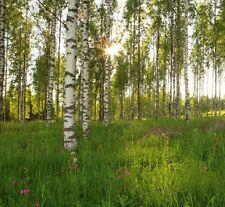 carta da parati fotografica Alberi Di Betulla Verde Con foresta arredo casa