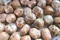 One Leopard Jasper Peru Tumbled Stone Chunky 20-25mm Healing Crystal Shamans
