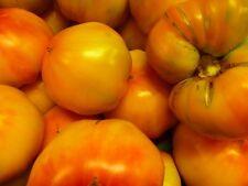 """samenfest von unserer Farm Ungarische Tomatensamen/""""Koritschnevaja Sliva/"""""""