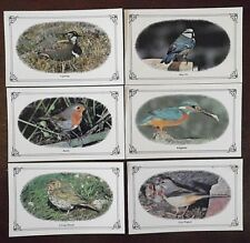 British Birds Postcards x 6, 4 Posted 2 Unposted by Colourmaster International