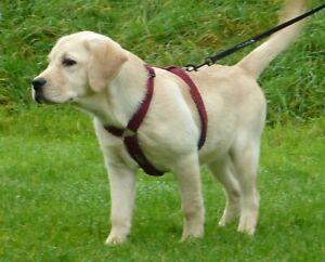 Lightweight Woollen strong British Dog Harness + Lead 4 Puppy / Adult Dog Summer