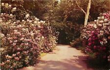 Great River-Long Island New York~Bayard Cutting Arboretum~1950s PC