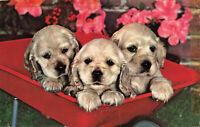 Postcard Three Puppies