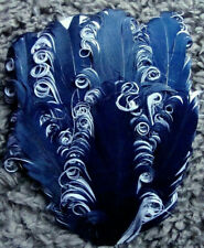 Navy on White Goose Nagorie Feathers, Feather Pad     US Seller