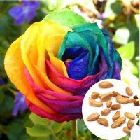 Fresh 600pcs Rare Rainbow Rose Flower Seeds Mixed Colors Garden Plant