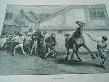 Gravure 1873 - Le cheval rétif