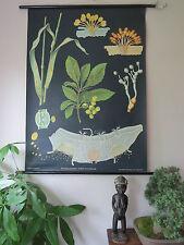 Vintage desplegable botánico Escuela Jung Koch quentell Tiza Cuadro De Hoja De Óxido