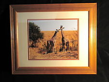 """African Giraffes Photo Framed 8""""x10"""" Photo Matted in Wood Frame Sale by Artist"""