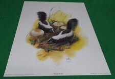 Vintage New Young Skunks Print Artist Don Balke Numbered Dated 1978