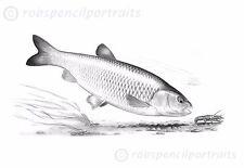 CHUB 'Cray Crunching' Chub Angler Fishing Collectable Art Drawing Print Picture