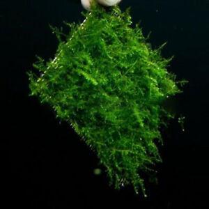 Stainless Steel Wire Mesh Pad Aquarium Fish Tank Plants Moss Mesh Pad Gift #E18
