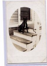 Real Photo Postcard RPPC - Pit Pitt Bull Dog on Porch