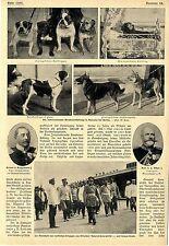 Internationale Hundeausstellung in Halensee bei Berlin Bilddokumente von 1905