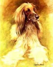 Afghan Hound - Vintage Dog Art Print - Poortvliet