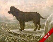 Inquisitive Irish Water Spaniel Pet Puppy Dog Art Painting Print On Real Canvas