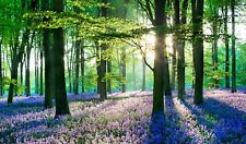 BLUEBELL WOODS WOODLAND FOREST CANVAS PICTURE POSTER PRINT UNFRAMED 678