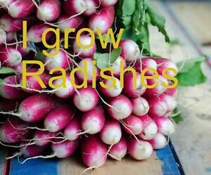 100+ Radish seeds - Grows super fast - Instant Food - Rustic Old World