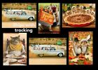 Avanti Happy Thanksgiving cards funny Lot of 6- Assorted Designs NEW- $22 value- photo