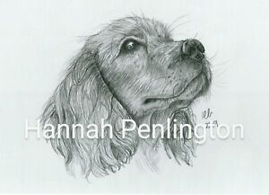 A4 Dog Portraits by Hannah Penlington, pencil drawing by artist, pet, gift,