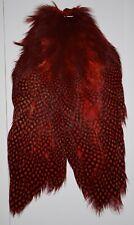 Red Guinea Chickabou Cape