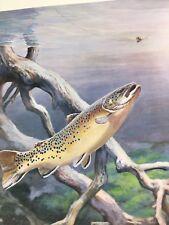 Brown Trout Vintage Bob Hines Fish Art Print US Dept Of Interior Bob Hines 1972