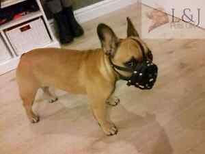 "Light leather Dog Muzzle for French Bulldog """