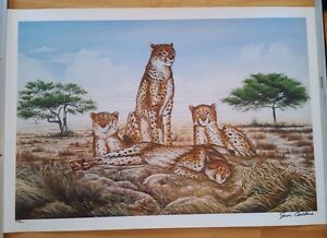 "Park West Gallery , Jim Collins  ""Cheetahs"" Seriolithagraph 885/1200  Signed"