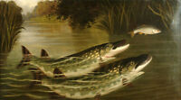 Art Oil painting Northern Pike and Lake Trout fish in lake landscape Natural law