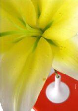 VASO PORTAFIORI Ceramica MASCHIO 36x25h16cm Mandarino