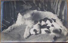 Terrier Dog Feeding Litter of Puppies - 1915 Realphoto Postcard
