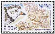 Timbre Oiseaux St Pierre et Miquelon PA85 ** année 2005 lot 18626