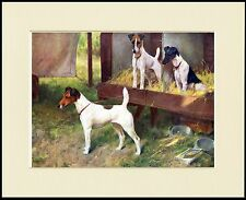 SMOOTH FOX TERRIER DOGS ON BENCH AT SHOW GREAT DOG PRINT MOUNTED READY TO FRAME