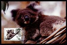 Koala. Maximumkarte. China - Australien 1995