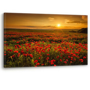Red Poppy Field at Sunset Flowers Large Canvas Wall Art Picture Print Poppies A0