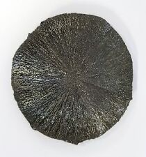 """3 1/2"""" PYRITE SUN DOLLAR Iridescent Crystal Sparta Illinois Coal Mine LARGE"""
