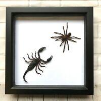 Tarantula Spider vs Forest Scorpion Deep Shadow Box Frame Display Insect Bug