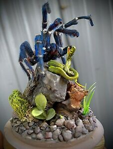 taxidermy mount real blue tarantula & grass snake related reptil lizard turtle
