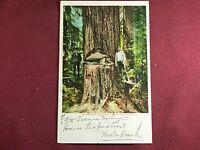 Oregon Logging Antique Photo Postcard 1905 Vintage
