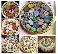 100Pcs Seeds Mixed Mini Lithops Succulent Cactus EXOTIC Living Stones Desert