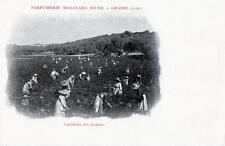 CPA 06 Parfumerie Molinard Jeune a GRASSE Cueillette des Jasmins (dos non divisé
