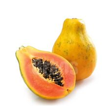 20+ PAW PAW Fruit Seeds Tropical Fruit Fast Growing In The Garden
