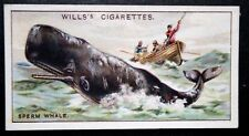 SPERM WHALE   Whale Hunt     Original Vintage Illustrated Card   VGC