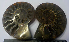 CLEONICERAS PAIR large  115mm x 90mm AMMONITE MADAGASCAR  310g