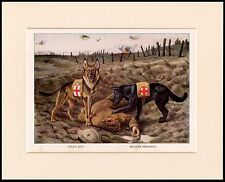 BELGIAN AND GERMAN SHEPHERD RED CROSS WAR RESCUE DOGS DOG PRINT READY TO FRAME