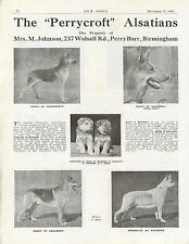 GERMAN SHEPHERD OUR DOGS 1943 DOG BREED KENNEL ADVERT PRINT PAGE PERRYCROFT