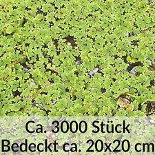 Wasserlinsen Schwimmpflanze Teichpflanze Teich Pflanze Futterpflanze gegen Algen